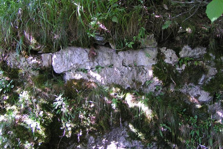 Kammerstein: Reste der quer über den Hang verlaufenden Mauer.