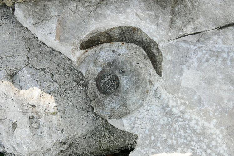 Gutrat: Torturm, Auflage für den Türflügel