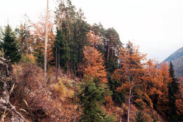 Henneberg: Der Burgfelsen von der Bergseite aus gesehen.
